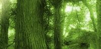 グリーン投資減税について