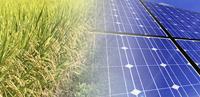 農業用地を太陽光で活用「ソーラーシェアリング」